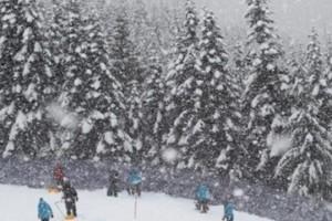 Thredbo的滑雪者撞树死亡